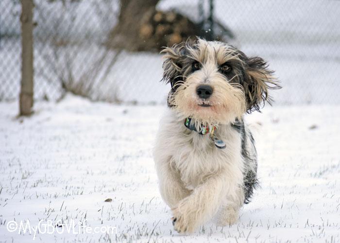My GBGV Life 7 Tips For Better Dog Photos
