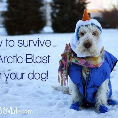 How To Survive An Arctic Blast With Your Dog
