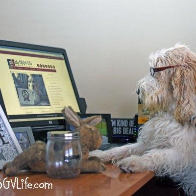 Pet Blogger Challenge 2018