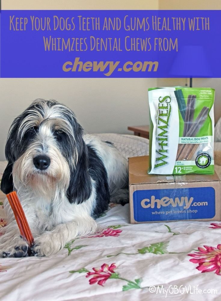 My GBGV Life Keep Teeth Healthy With Whimzees Dog Treats #ChewyInfluencer