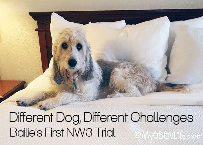 My GBGV Life Different Dogs, Different Challenges - Bailie's First NW3