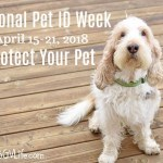 National Pet ID Week – Protect Your Best Friend