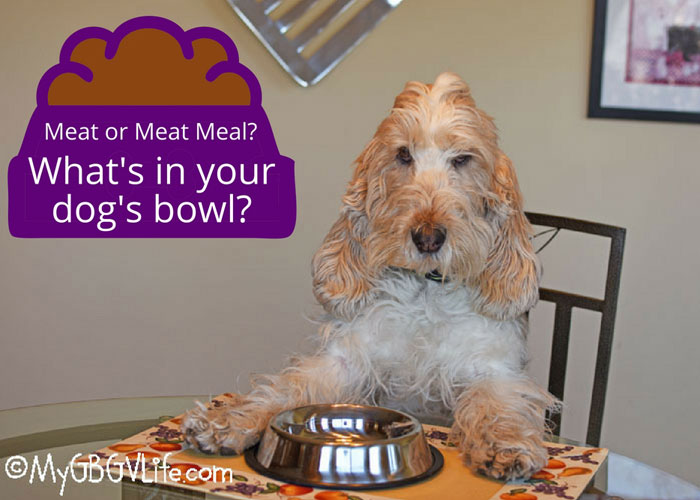 My GBGV Life Take The Meat Meal Out Of Your Dog's Meal - Why We're Switching Food