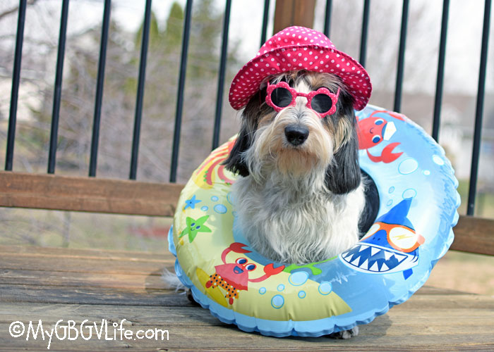 My GBGV Life Did Someone Say Pool Party?