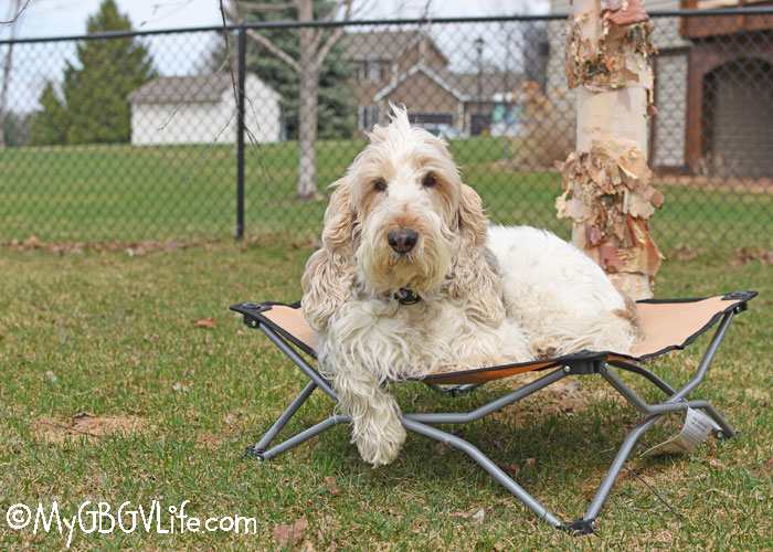 I don't travel around as much as I used to, but I can use this dog cot right here at home or on the road!