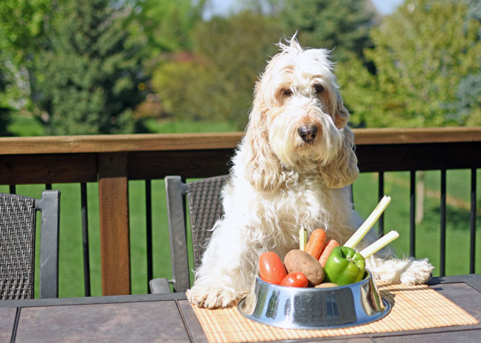 My GBGV Life A Vegan Diet For Dogs? Will A Dog Eat Without Meat?