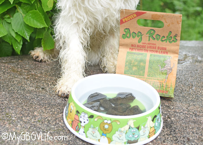 My GBGV Life End Urine Spots On Your Lawn With Dog Rocks – Giveaway