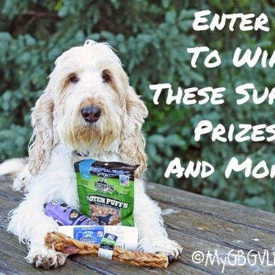 """Your Dog Says, """"Enter The Red Barn Hot Summer Giveaway!"""""""