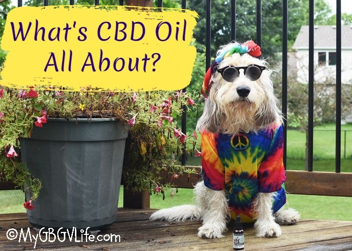 What Is CBD Oil All About?