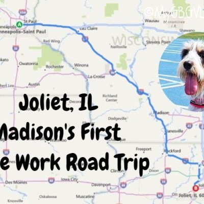 Madison Earns Her First Nose Work Title In Joliet Illinois