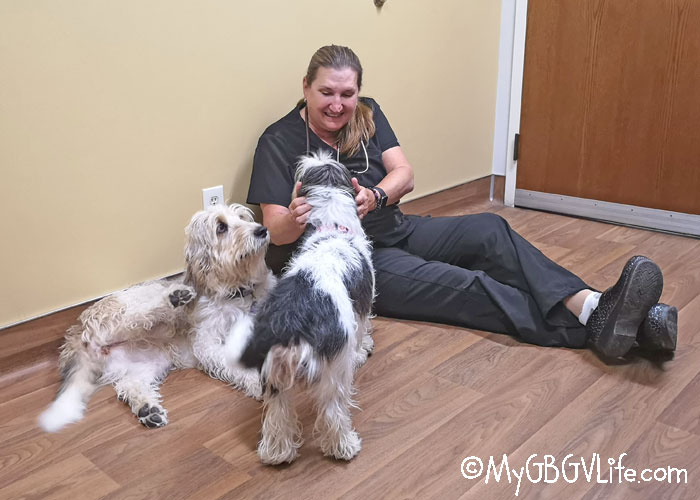 My GBGV Life We Are Thankful Another Yearly Vet Visit Is Behind Us