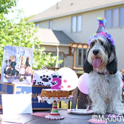 Let's Party! When Hounds Celebrate A Second Birthday!