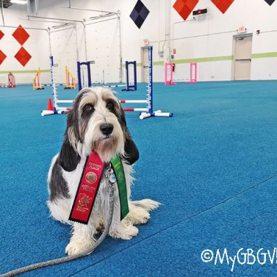 Madison's First AKC Agility Trial – A Learning Experience
