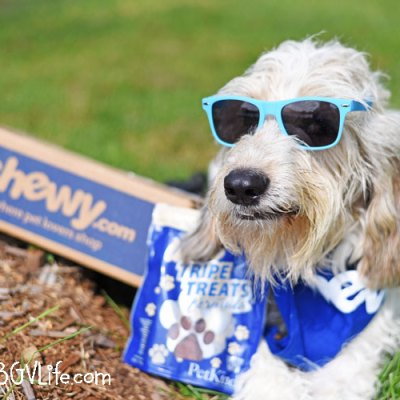 What Will Your Dog Do For Lamb Tripe Treats? #ChewyInfluencer
