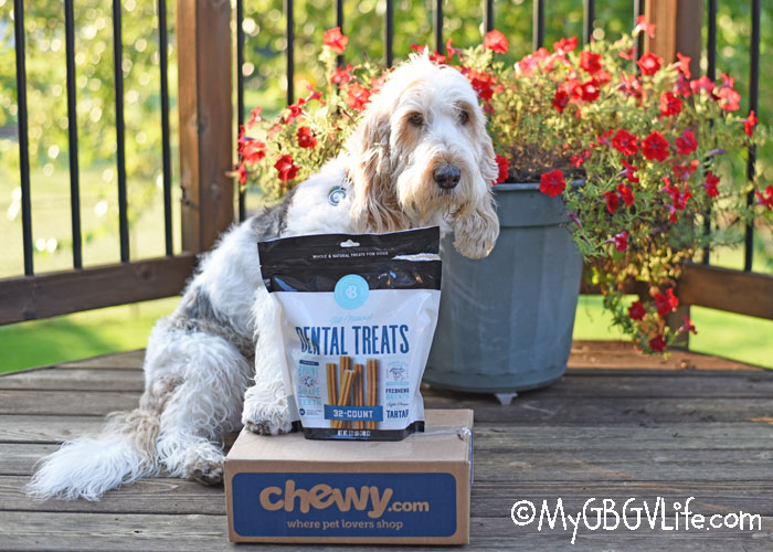 My GBGV Life Tasty All Natural Dental Chews For Your Dog - #ChewyInfluencer