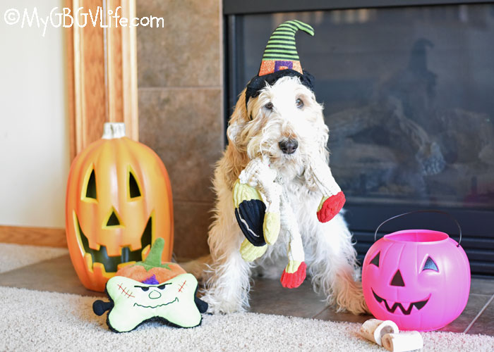 My GBGV Life 7 Tips For Dog Safety During Halloween Season