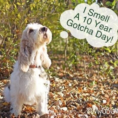 I Smell A Ten Year Gotcha Day!