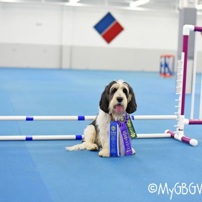 Madison Brings Home The First Agility Title In Our Family