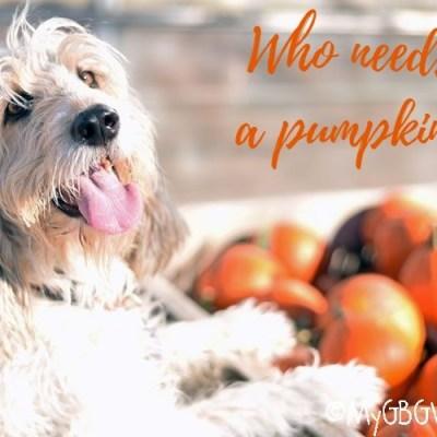 Bailie Hits Pahls Halloween Market