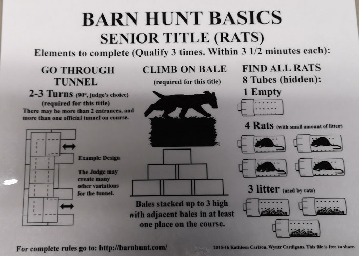 My GBGV Life The Hunt Is On For The Senior Barn Hunt Title