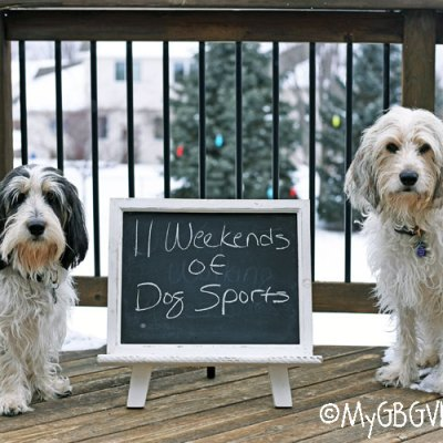 Eleven Weekends Of Dog Sports – Results And Conclusions