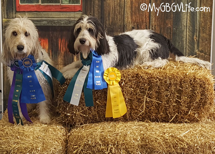 My GBGV Life 2018 - A Banner Year For Barn Hunt Titles