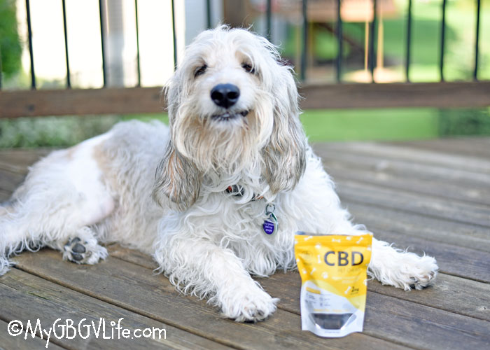 CBD Pet Chews Reduce Your Dog's Anxiety
