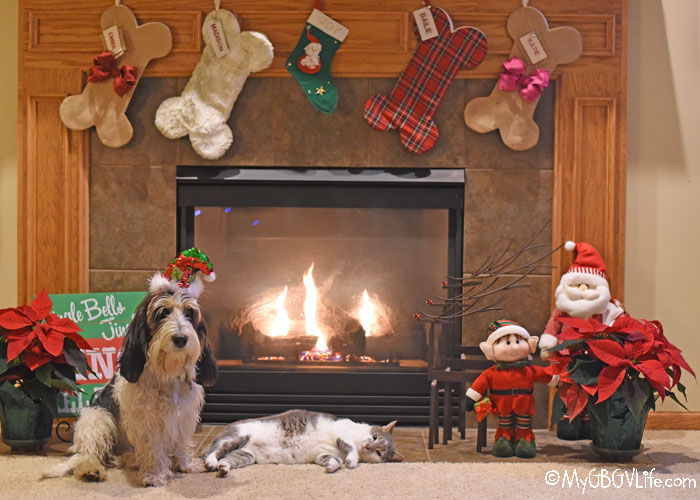 My GBGV Life 5 Christmas Eve Rules For Dogs