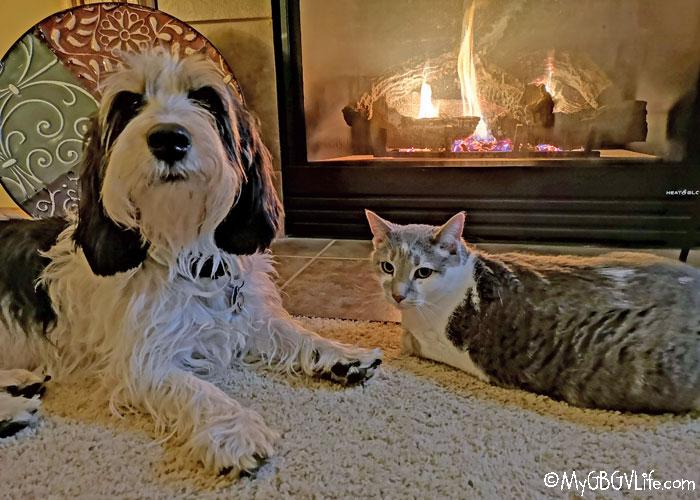 My GBGV Life Cozy, Happy, And Warm With Cat Bro Bert