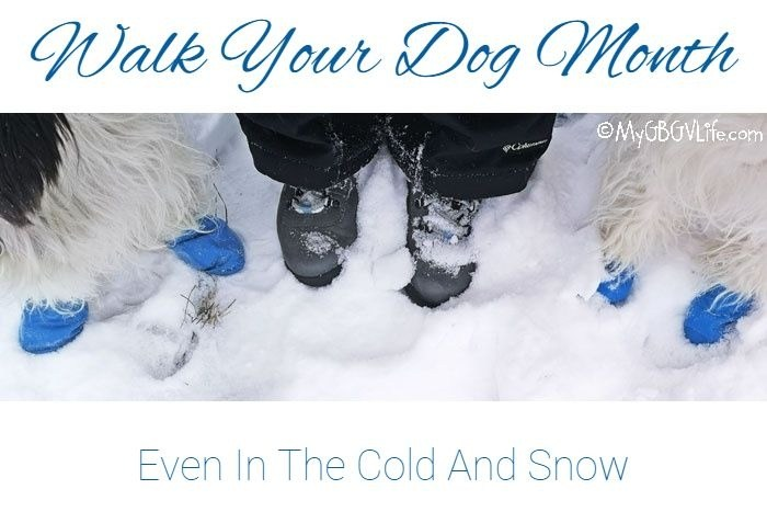 Walk Your Dog Month – Even In The Cold And Snow