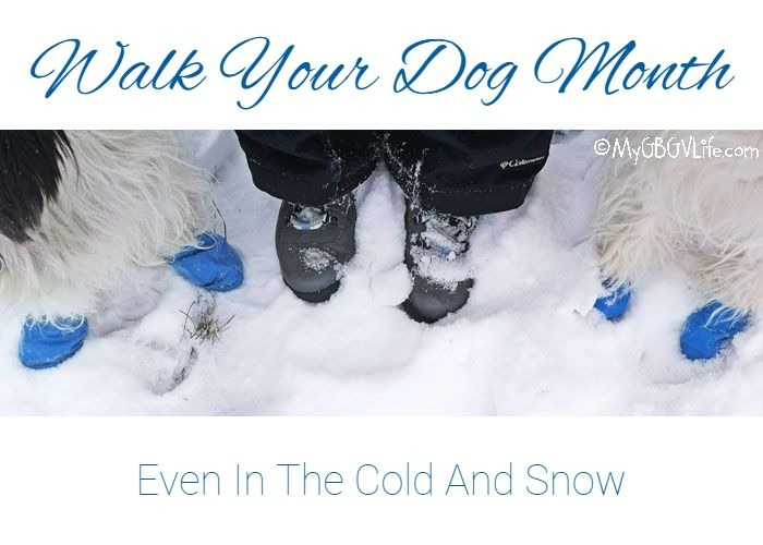 My GBGV Life Walk Your Dog Month - Even In The Cold And Snow