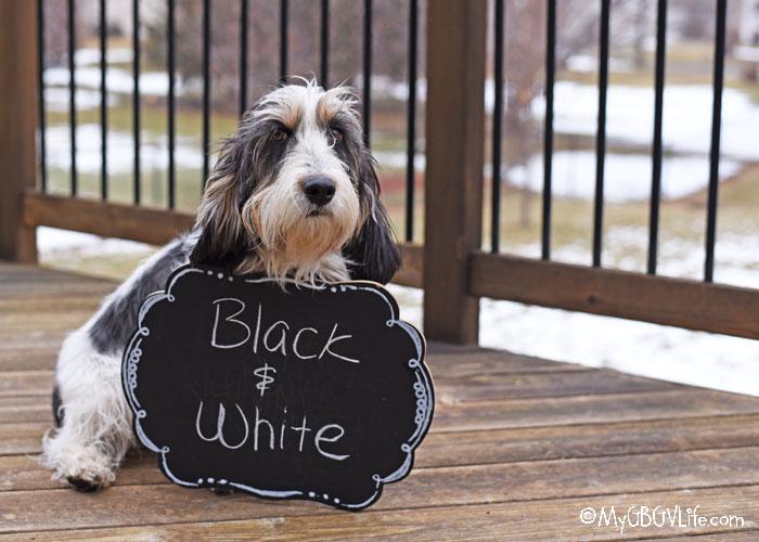 My GBGV Life Inspiration Black And White - Photo Challenge #DogwoodWeek3