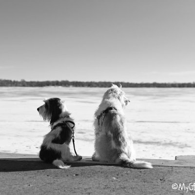 The Old Version Of Lake Calhoun – A Warm Winter Walk