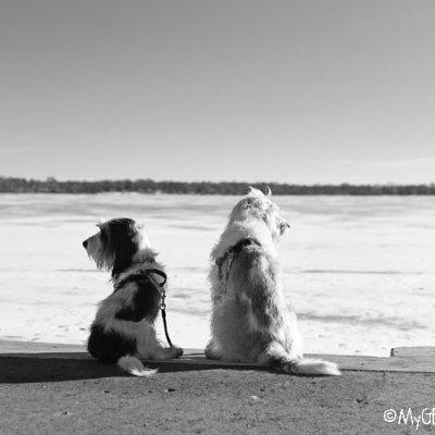 The Old Version Of Lake Calhoun – A Warm Winter Walk
