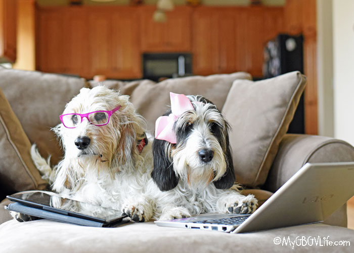 My GBGV Life Pet Blogger Challenge 2019