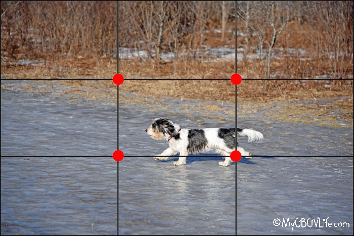 My GBGV Life Rule Of Thirds Showing Motion - Photo Challenge #DogwoodWeek2