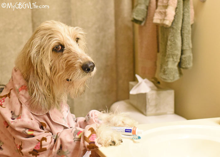 My GBGV Life Pet Dental Health Month - How Are Your Dog's Teeth?