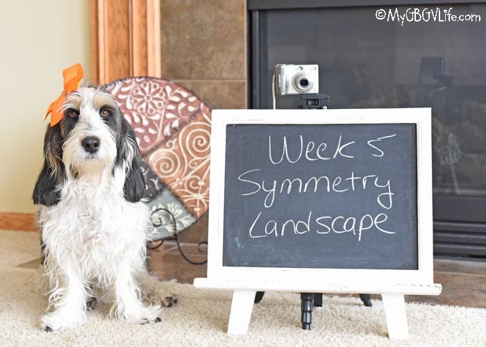 My GBGV Life Composition - Symmetry Landscape – #DogwoodWeek5