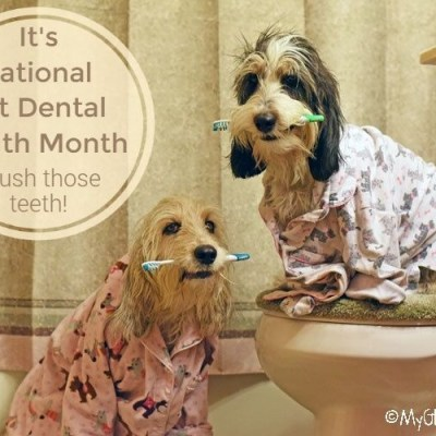 Pet Dental Health Month – How Are Your Dog's Teeth?