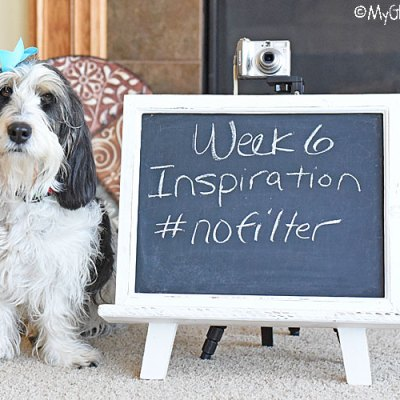 Inspiration – No Filter #DogwoodWeek6