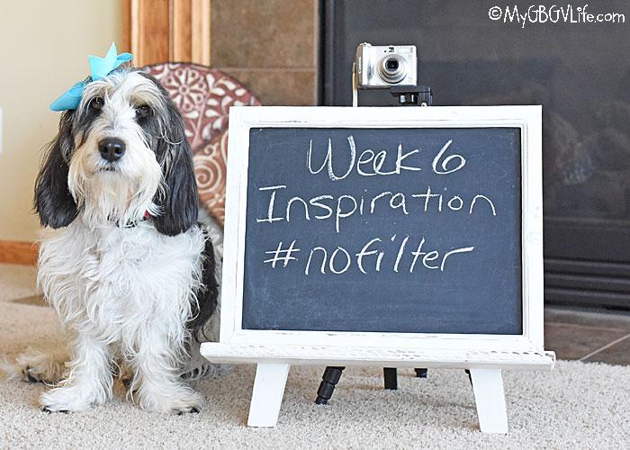My GBGV Life Inspiration - No Filter #DogwoodWeek6