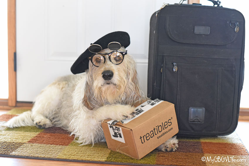 My GBGV Life How To Calm Dogs With Travel Anxiety