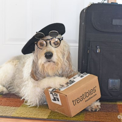 How To Calm Dogs With Travel Anxiety