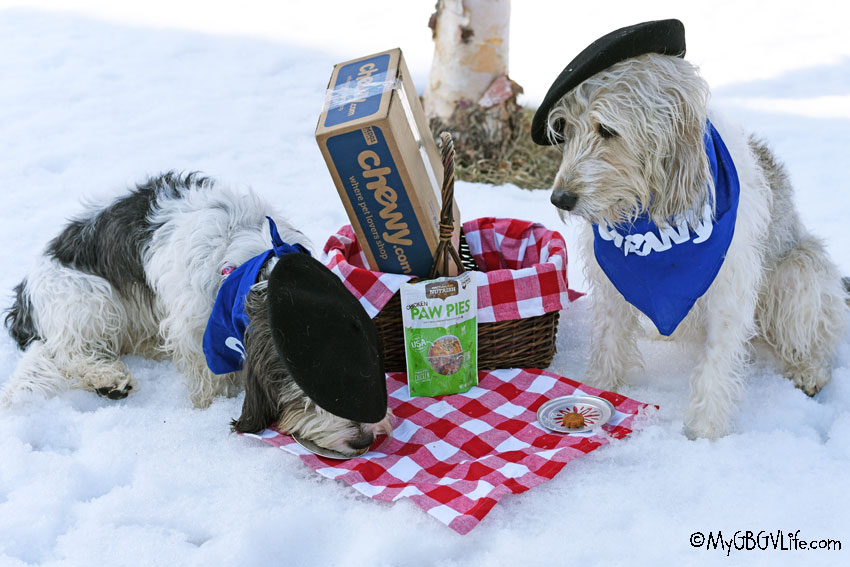My GBGV Life Paw Pies Are A Must For Spring Picnics #ChewyInfluencer