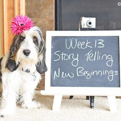 Story Telling – New Beginnings #DogwoodWeek13