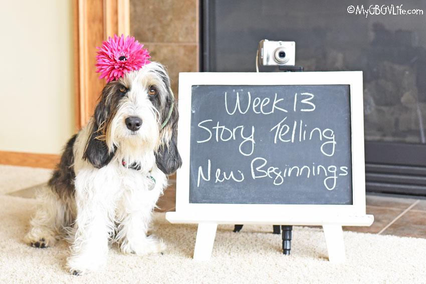 My GBGV Life Story Telling - New Beginnings #DogwoodWeek13