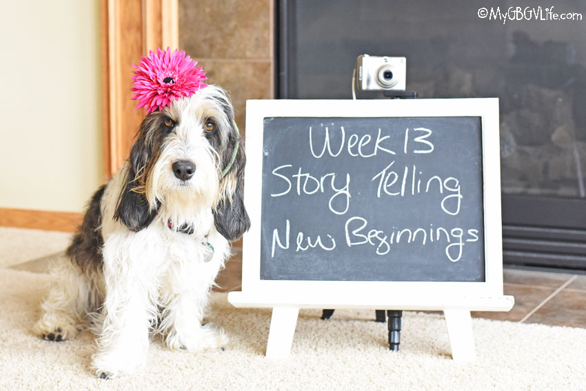My GBGV Life Story Telling - New Beginnings #DogwoodWeek13
