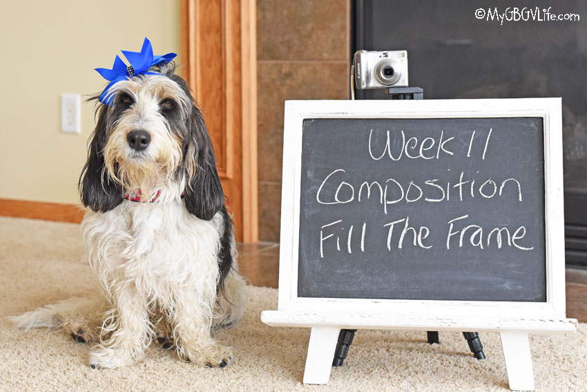 My GBGV Life Composition - Fill The Frame #DogwoodWeek11