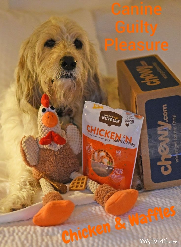 My GBGV Life Canine Guilty Pleasure - Sweet And Savory #ChewyInfluencer