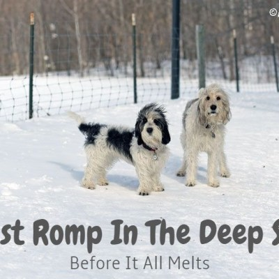 One Last Wild Romp In The Deep Stuff Before It Melts